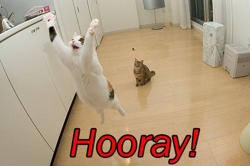 cat saying hurray
